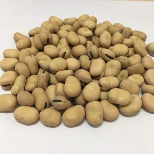 Dried White Kidney Beans Broken Ratio (%): 0.89%