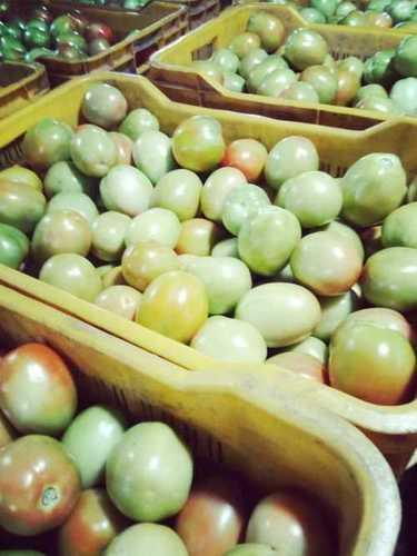 Fresh Organic Green Tomatoes