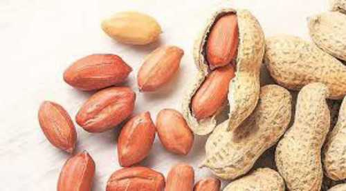 Natural Test Ground Nut