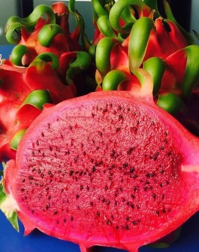 Fresh Dragon Fruit Red Flesh