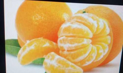 Delicious Taste Orange Fruit
