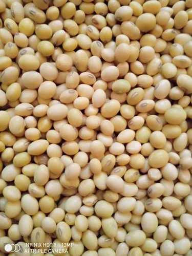 Good Taste Soyabean Seeds