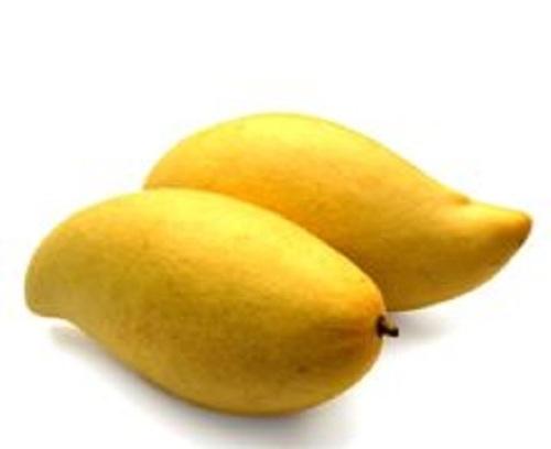 Pure Totapuri Mango Pulp