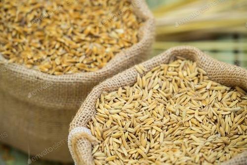 Medium Grain Paddy Rice