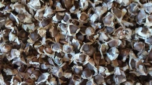 Natural Moringa Oleifera Seeds