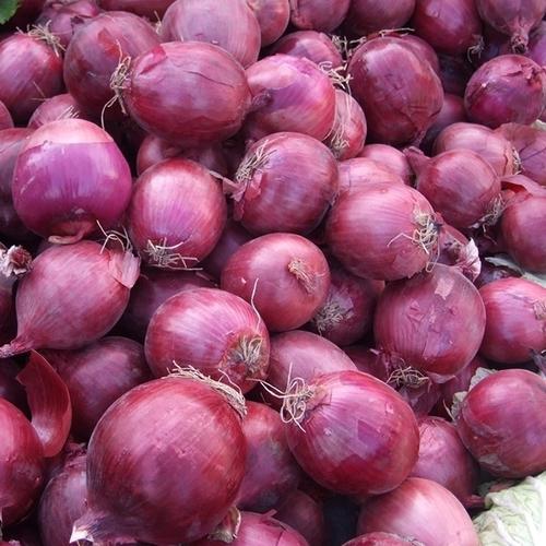 Medium Size Fresh Red Onions