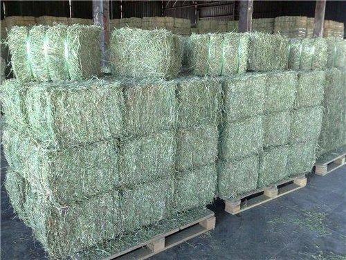 Natural Green Alfalfa Hay