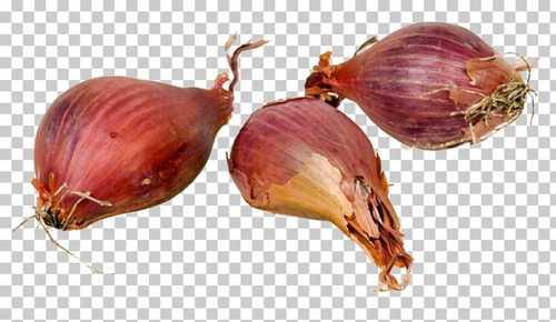 Organic Fresh Small Onion