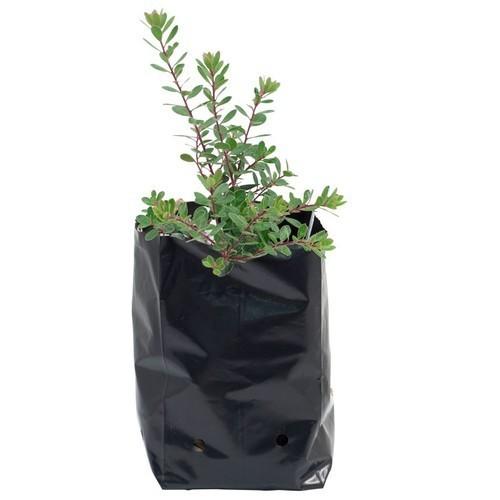 Black Plant Grow Bags