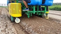 Onion Transplanter For Uniform Planting