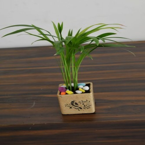 Table Top Palm With Ceramic Pot