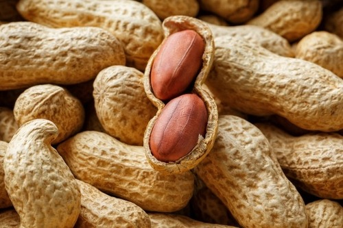 High Nutrients Shelled Peanut