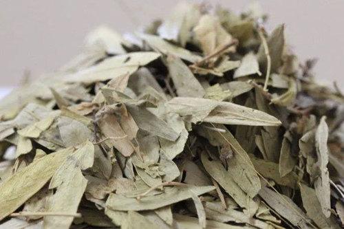 Natural Herbal Senna Leaves