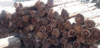 Solid Teak Wood Log