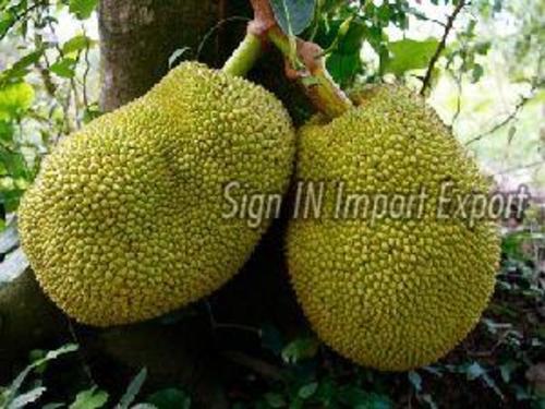 Preserved 100% Natural Fresh Jackfruit
