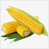 Natural Indian Yellow Maize