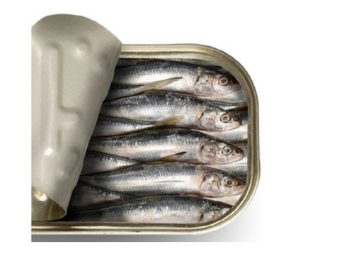 Healthy Canned Sardine Fish