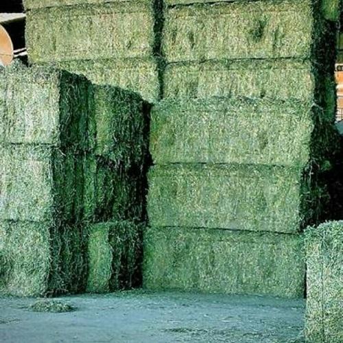 Animal Feed Alfalfa Hay