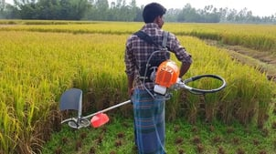 Rice Cutting Machine For Agriculture