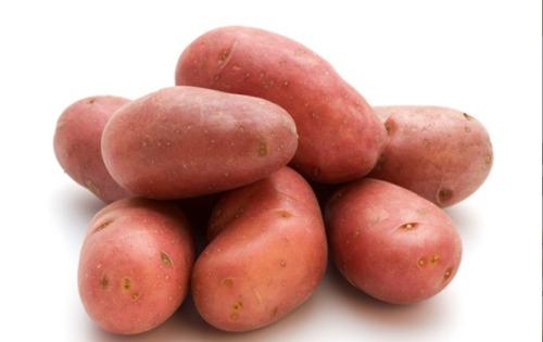 Lady Rosetta (L.R) Potato