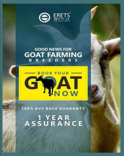 Goats For Farming