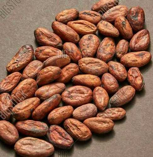 Fresh Raw Cacao Beans