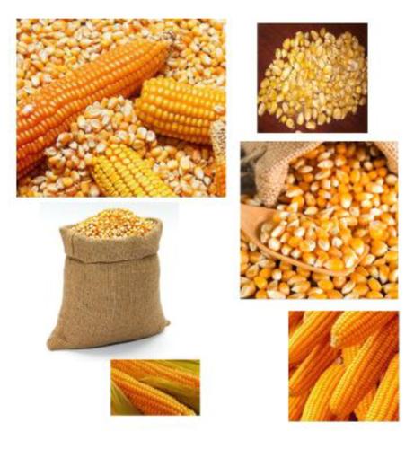 Natural Dried Yellow Corn