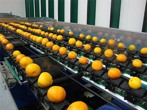 Automatic Orange Fruit Grading Sorting And Packing Machine