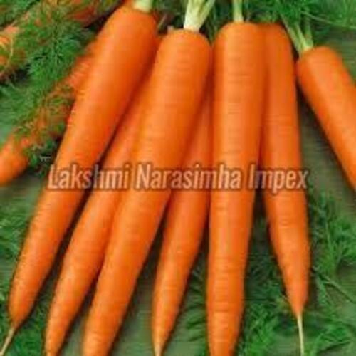 Fresh Organic Carrot for Food