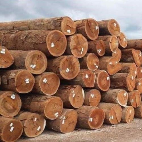 Round Teak Wood Logs