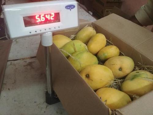 Farm Fresh Banganapalli Mangoes