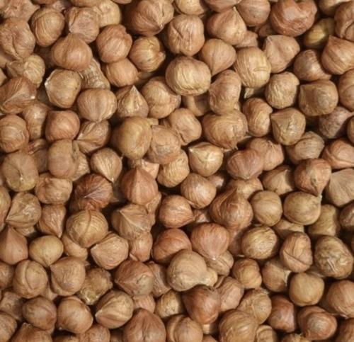 Rich In Protein Hazel Nuts