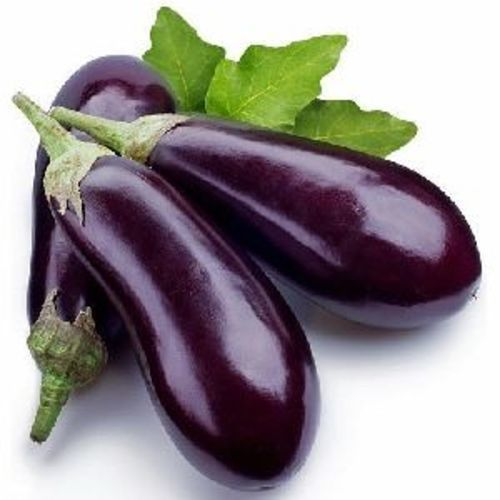 A Grade Fresh Brinjal for Cooking