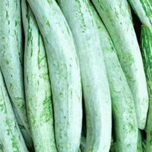 Fresh Green Snake Gourd