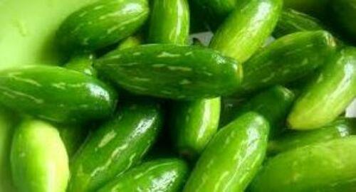 Fresh Green Tendli For Cooking