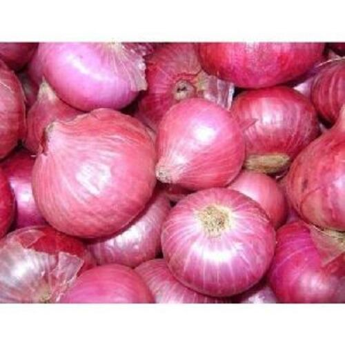 Fresh Pink Onion for Cooking