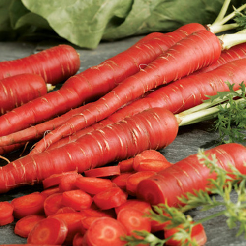 Fresh Red Carrot for Food