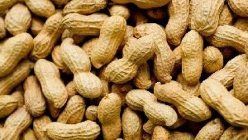 Healthy Raw Natural Groundnuts