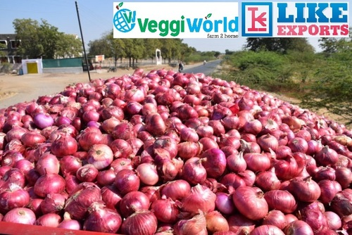 Indian Origin Red Onion