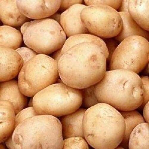 Fresh Organic Potato for Cooking