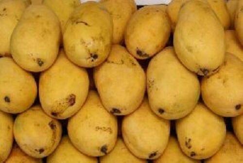 Fresh Chaunsa Mango Fruits