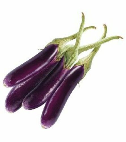 Fresh Long Brinjal for Cooking