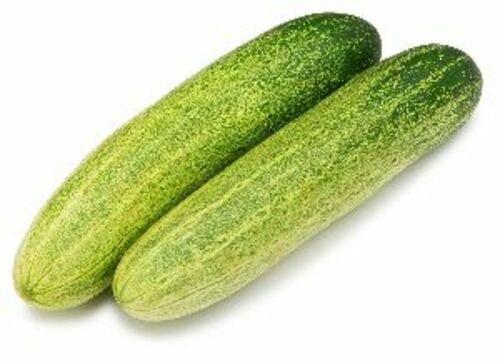 Fresh Natural Cucumber for Food