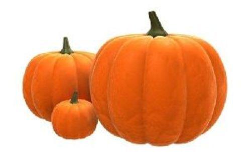 Fresh Natural Pumpkin for Food