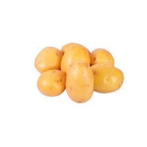Fresh Organc Potato for Cooking