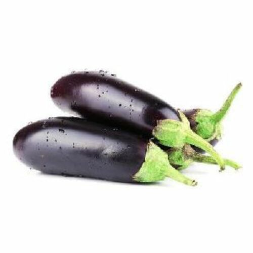 Fresh Organic Brinjal for Cooking