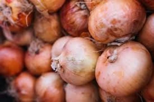 Fresh Organic Onion for Cooking