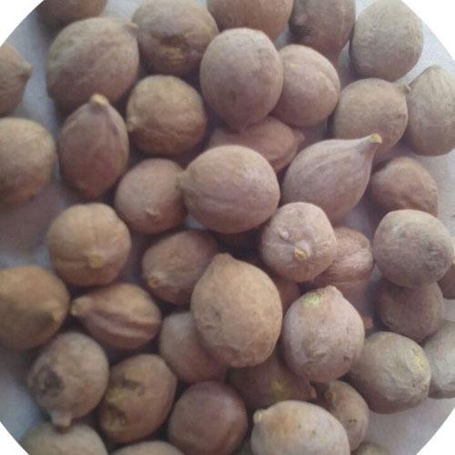 Indian Origin Baheda Herb