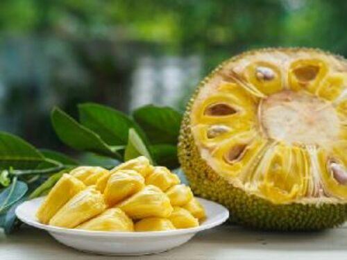 Fresh Green Jackfruit for Cooking
