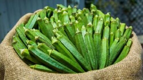 Fresh Green Okra for Cooking